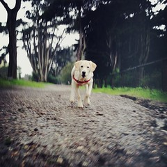 A rainy romp through the woods with Ruby