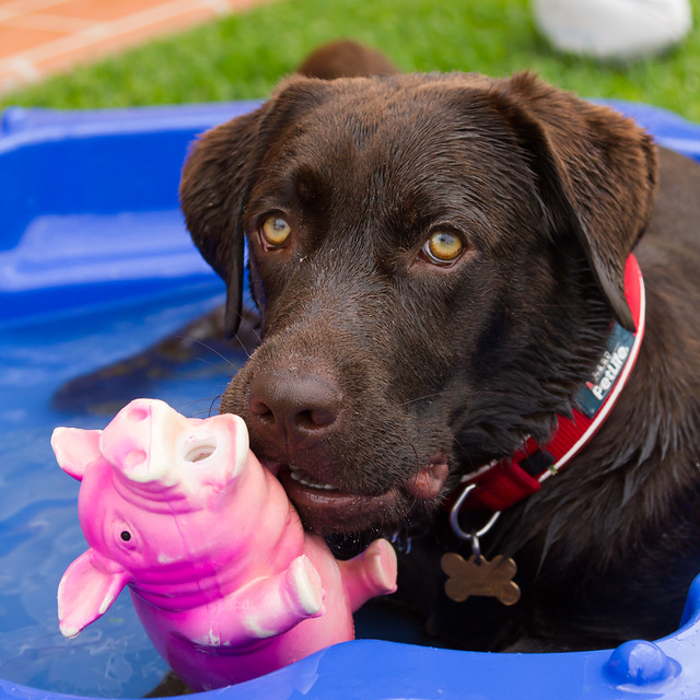 Image Result For Pools That Dogs