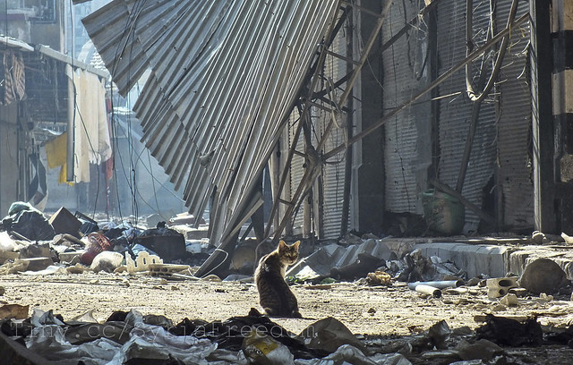 A cat stands among debris in the damaged old souk of Homs, on November 15, 2012. Picture taken November 15, 2012. (Reuters/Yazan Homsy)