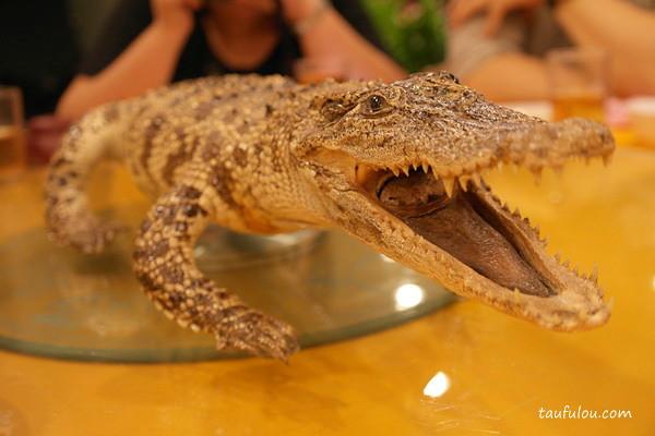 Croc (18)