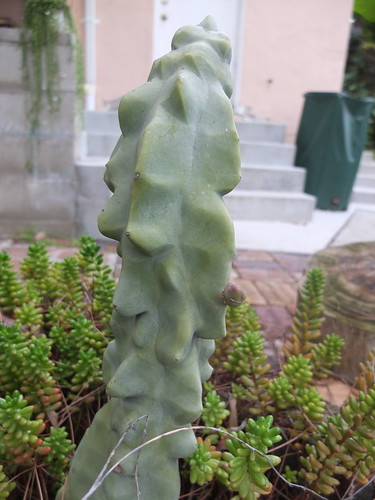 cactus with tiny arm