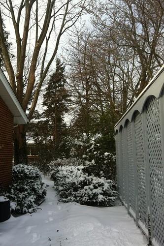 Day 5 Snow