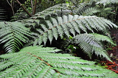 arecales(0.0), flower(0.0), garden(0.0), rainforest(1.0), leaf(1.0), tree(1.0), flora(1.0), forest(1.0), ostrich fern(1.0), ferns and horsetails(1.0), jungle(1.0), vegetation(1.0),