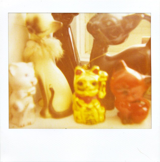 polaroid - cats
