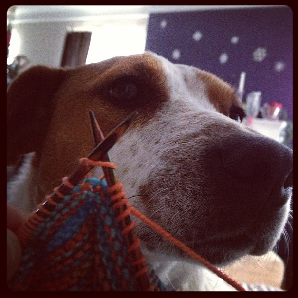 Tried to start the new year knitting for the first time in forever. The dog is NOT amused. #knit #knitting #destinationyarn #hitchhiker