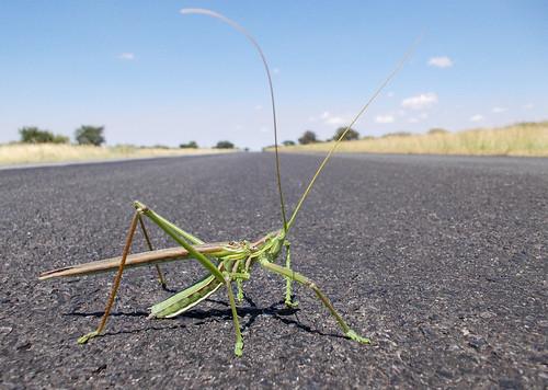 bicharraco en la carretera