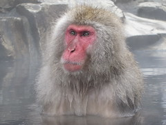 Snow monkey soak