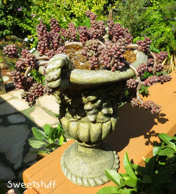 Urn of succulent loveliness