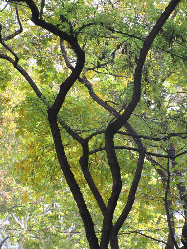Reading Messages in the Contortions of Trees