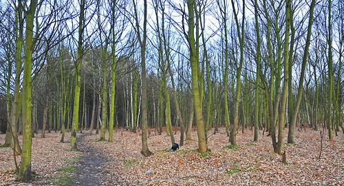 Swinnow Woods 2 by birbee