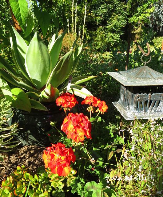 Succulents and companion plants