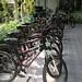 Follow Me Bicycle Tour