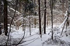Глухомань // Backwoods