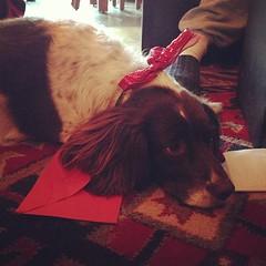 Christmas Molly