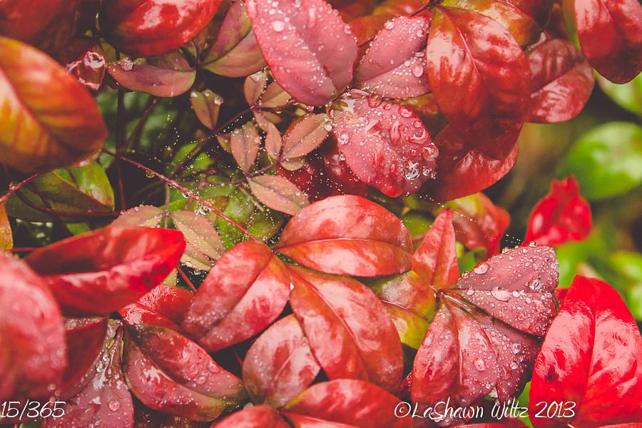 15/365: rainy days