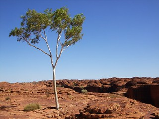 Australia, NT, Kings Canyon