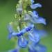 蓝色生死恋 《祈祷》Blue Love (Prayers)