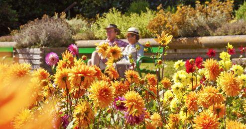 Summer Floral Festival