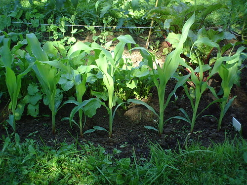Our First Vegetable Garden