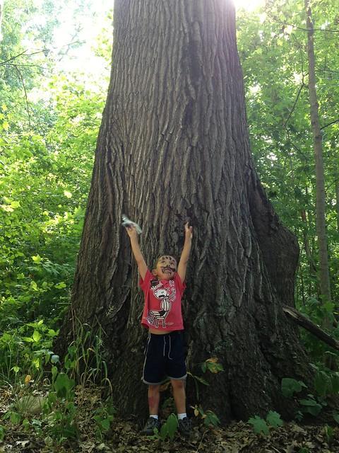Geocache Tree