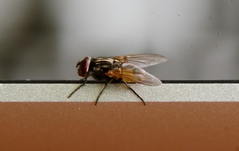 Fly 18 (4)