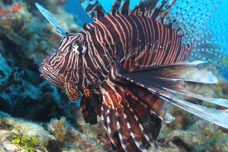 Grand Cayman Island Condo Photos & Media Gallery