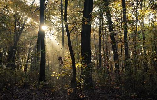 trees sun mist leaves yellow fog forest foggy nj sunburst eastbrunswick dallenbach
