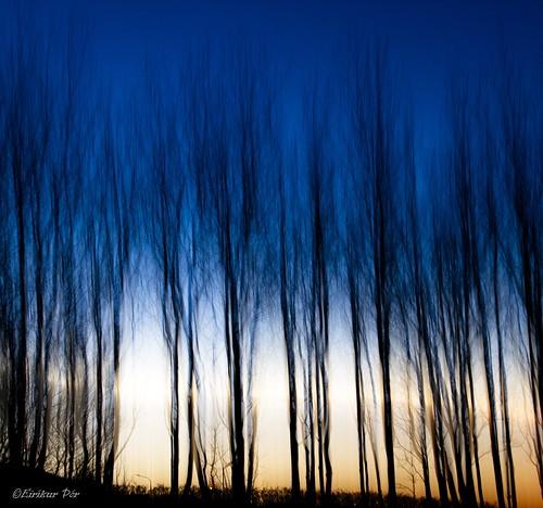 sunset tree canon tré 2012 kópavogur fossvogur sólsetur newacademy canoneos7d awardtree canonefs1585mmf3556usmis