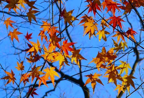 Autumn Colors:红叶