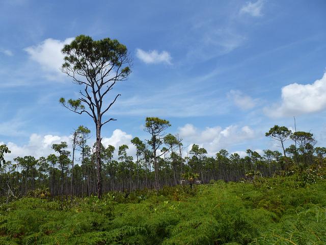 Lucayan National Park  Bahamas