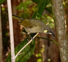 Birds of Whitsunday Shire