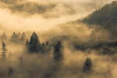 Fog at the Saarschleife