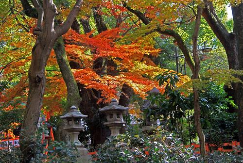 Koyo tardío en Kyoto I