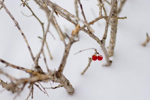 White Christmas 2012-011.jpg