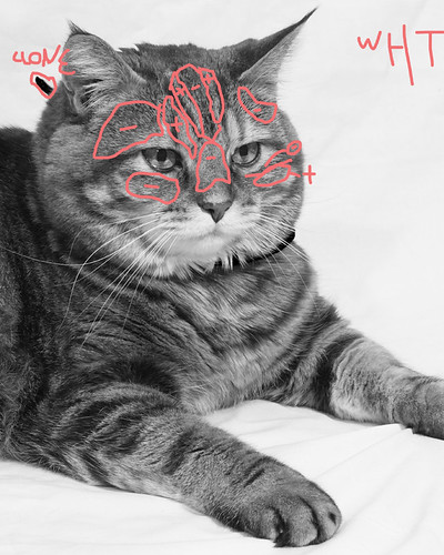 Christmas Kitty: Avedon edit Bailey