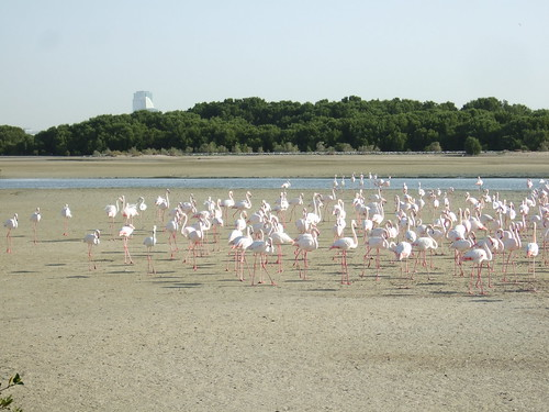 Ras al Khor and Flamingos
