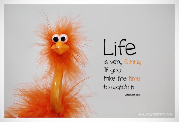 Orange Ostrich - Life