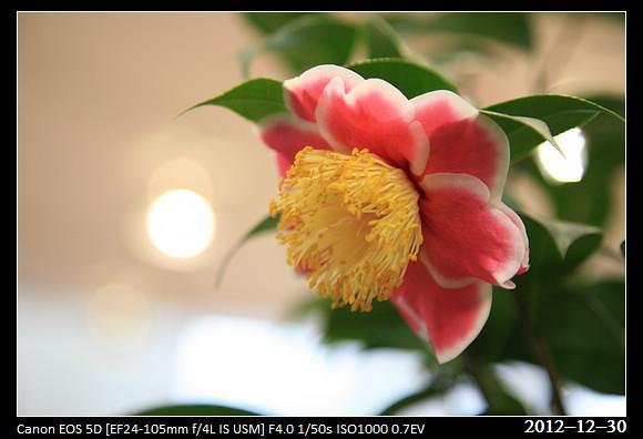 20121230_Flower6