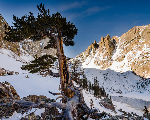 trees usa sun mountain snow mountains tree ice sunrise landscape colorado unitedstates northamerica estespark rockymountainnationalpark emeraldlake bristleconepine tyndallgorge