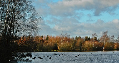 Daneshill Lakes by birbee