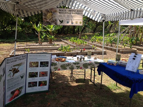 Maui Forest Bird Recovery Project table at the Maui Nui Botanical Gardens' Earth Day 2012.