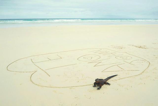 Iguana declarando su amor por Johan