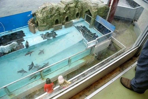 寺泊水族博物館2012冬