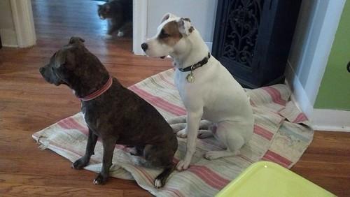 Symmetrical dogs