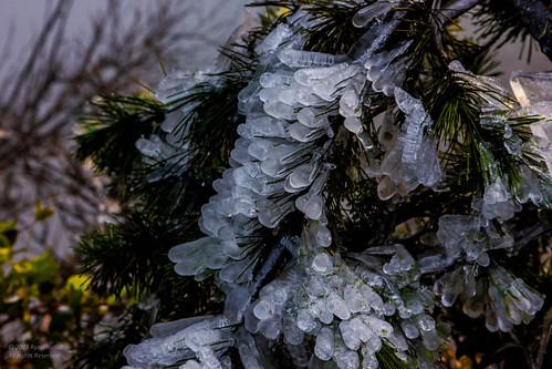 Frozen Hope