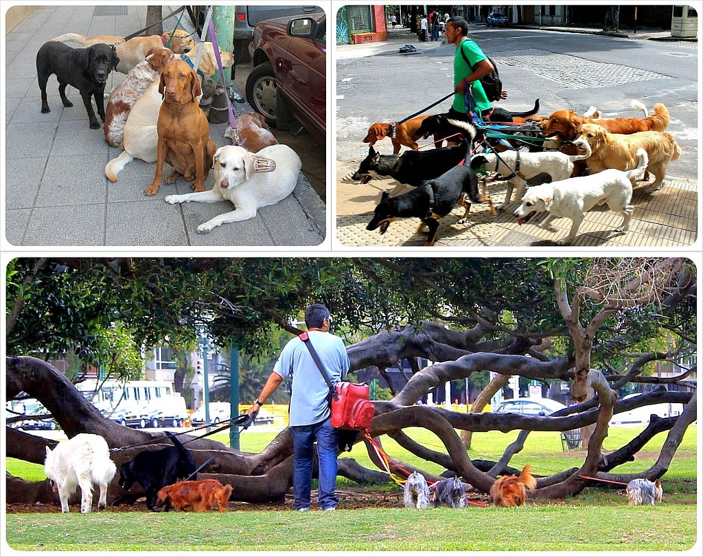 Buenos Aires dogwalkers
