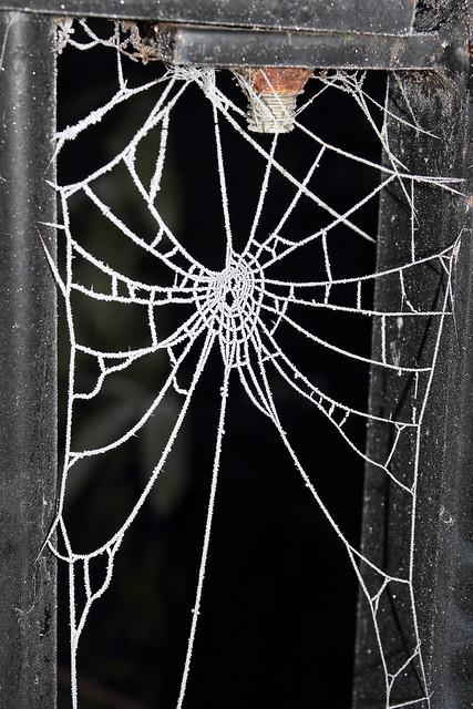 Cobwebs on the canal bridge