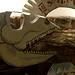 Dino cardboard art by Banjo Bob