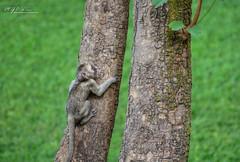 Young Monkey :)