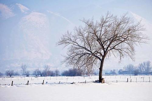 snow tree field fog landscape